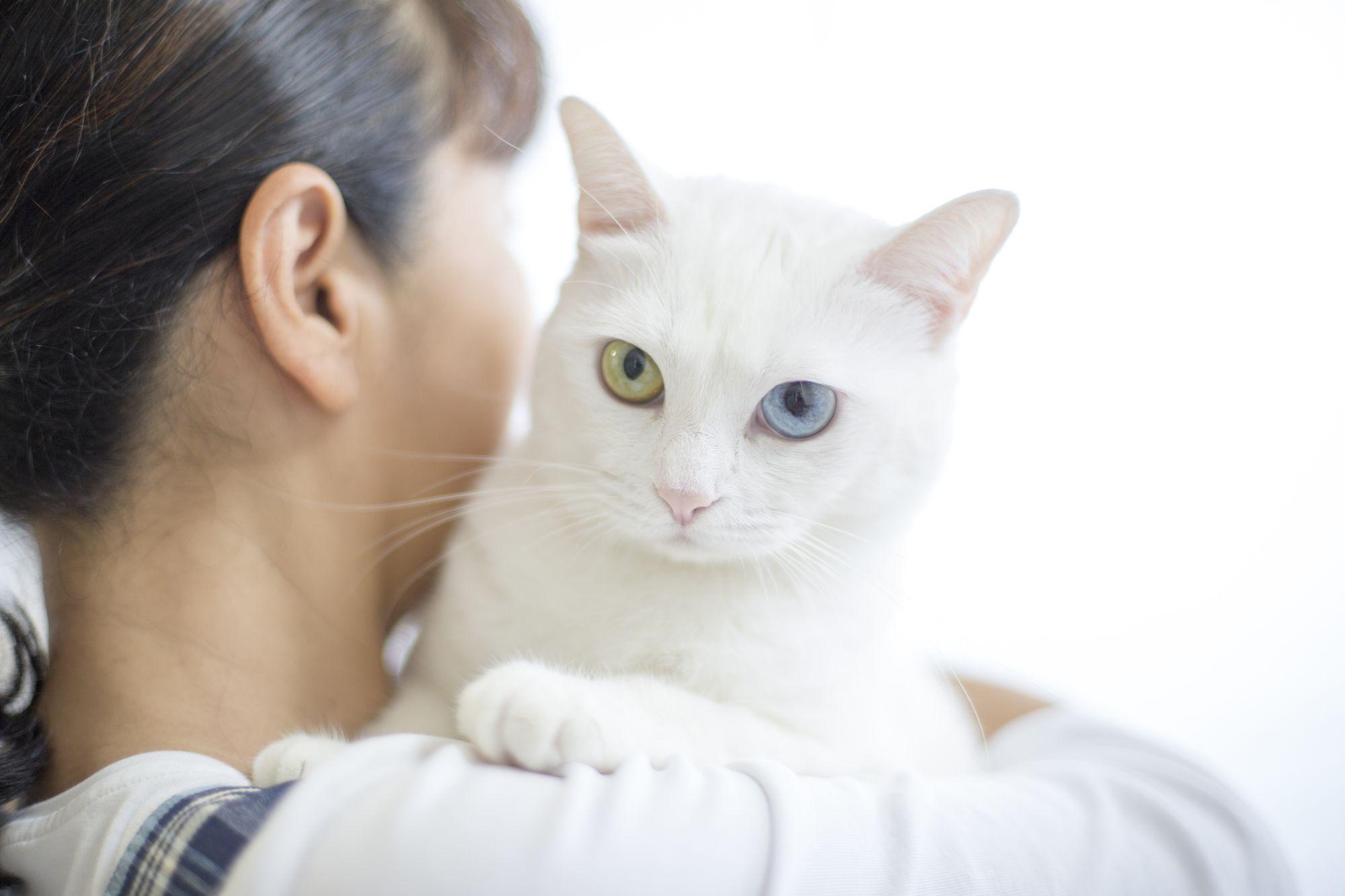 和室の畳の部屋で猫を飼ってらっしゃる方、畳の上 …